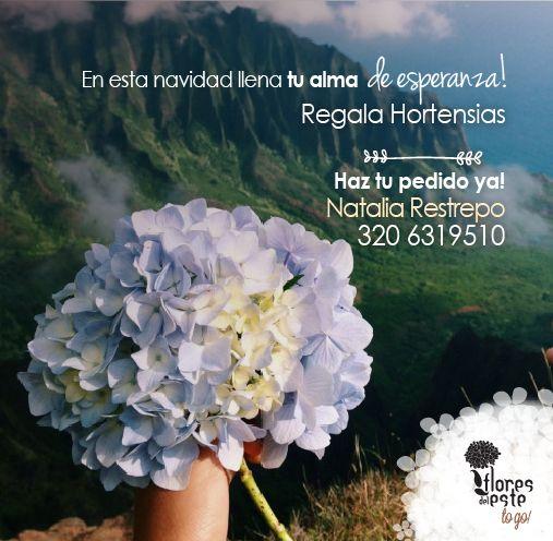 #hortensias #sorprende #regala #floresdelestetogo #floresdeleste #lunes #love #amor #beso