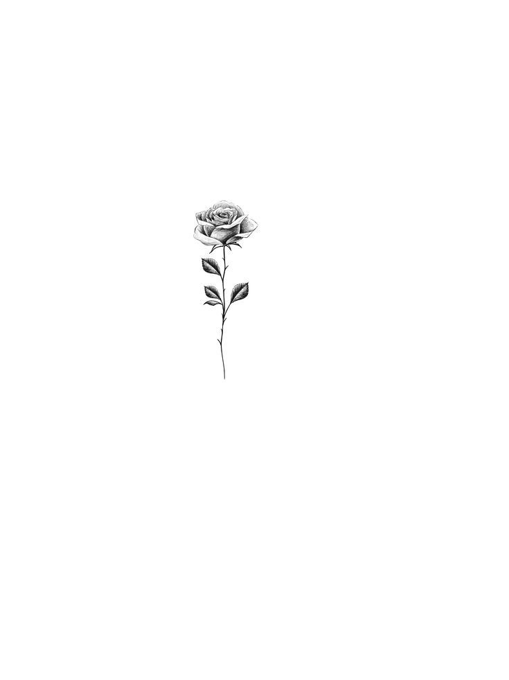 Small Black And White Tattoo Designs: Rose Drawing Tattoo