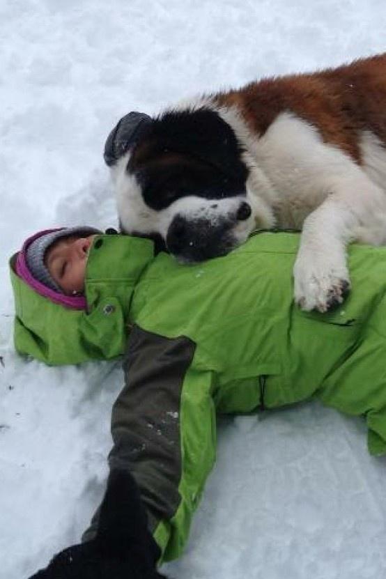 33 Best Images About Pet Friendly Get A Ways On Pinterest