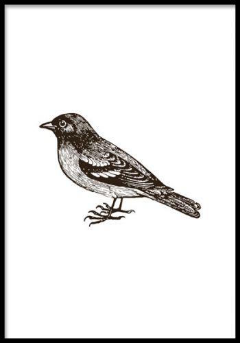 Tavla med handritad fågel i svartvitt, fin i tavelvägg. Liten poster med handritad illustration av blå fågel. Fin till vintage inredning men passar även andra stilar.