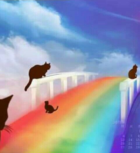 Rainbow Bridge Mehr
