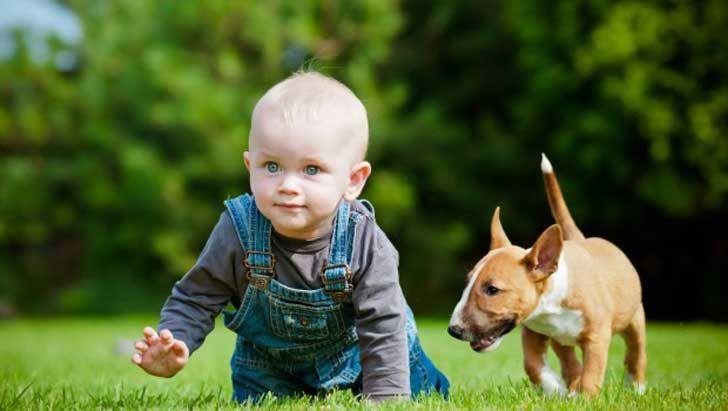 15 Hechos Protagonizados Por Perros Que No Vas A Poder Creer Que Sucedieron - ¿Creíassaberlo todo de tu amigo peludo? Ponte a prueba con estos impactantes datos. Probablemente,muchossaben que los loberos irlandeses son la raza de perros más grande del mundo o que los canesen general son muy sensitivos y tienen un olfato impresionante. Pero a continuación, tendrás la op... #vive=Personas,animales,lavidaytodossussecuaces.  http://www.vivavive.com/15-hechos-prota