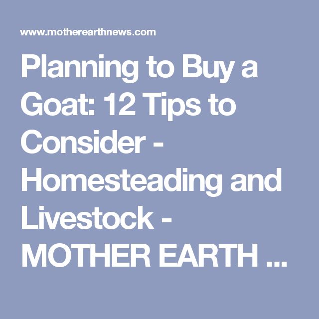 Planning to Buy a Goat: 12 Tips to Consider - Homesteading and Livestock - MOTHER EARTH NEWS