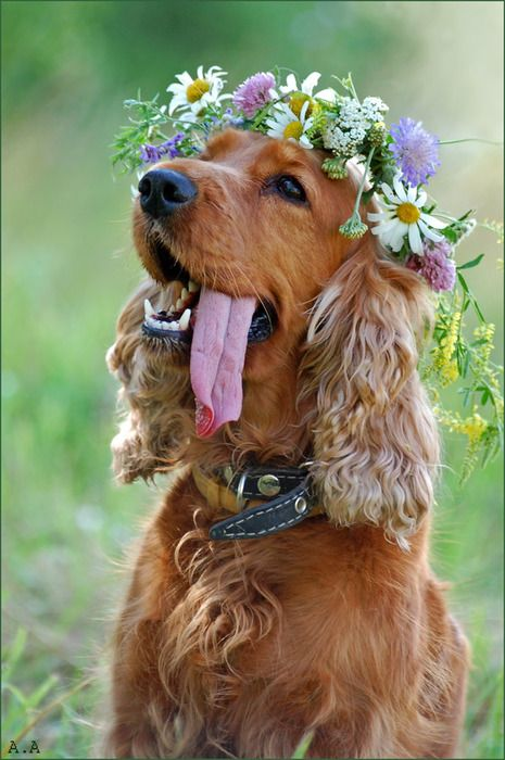 """Hippie Dog"" ~ Photo by Androsov :)"