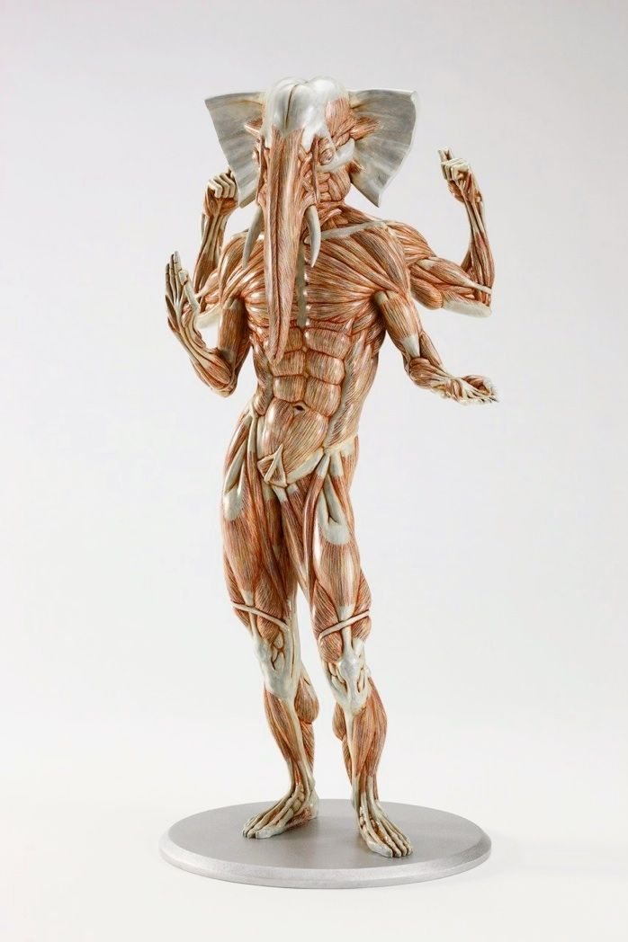 38 best mythical creatures anatomy images on Pinterest ...