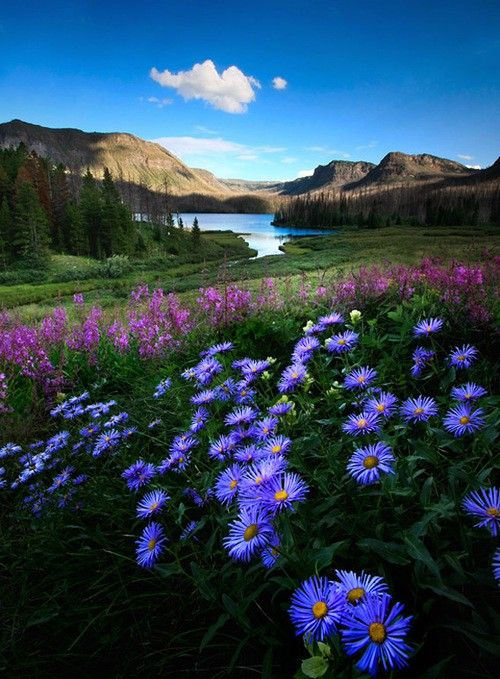 Landscape of wild flowers