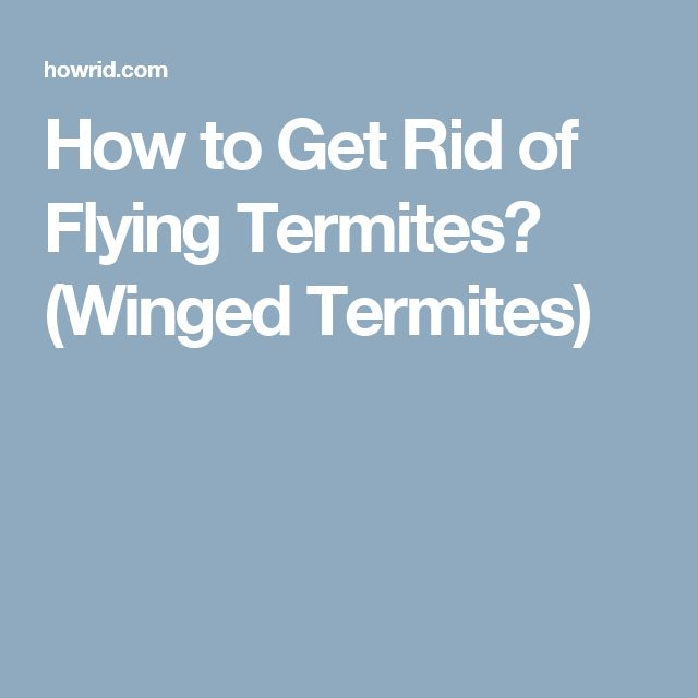 How to Get Rid of Flying Termites? (Winged Termites)