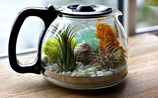 terrarium à café