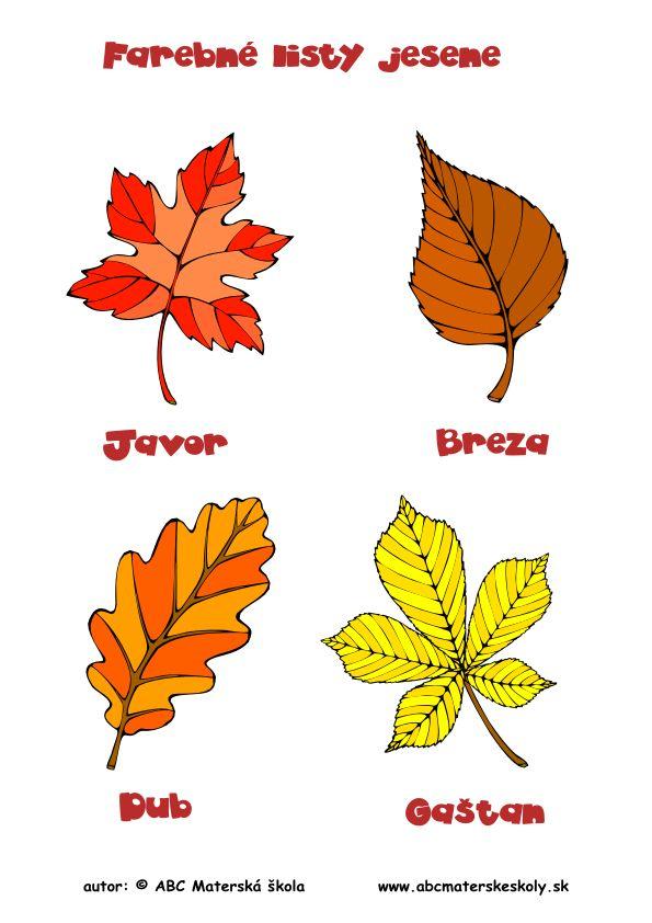 farebné listy jesene - farebný pracovný list z ABC materské školy