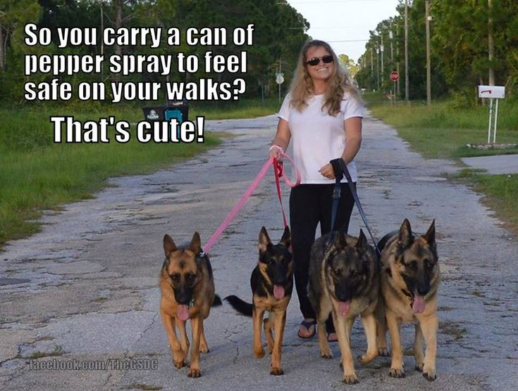 nothin to worry about with those dogs!!! TRUE . . .