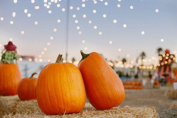 love autumn | las vegas stu millers pumpkin patch halloween gaby j photography