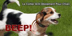 Heureusement, il existe un solution humaine et efficace de dresser votre chien pour qu'il aboie moins. Cette solution, c'est le collier anti-aboiement.   Découvrez l'astuce ici : http://www.comment-economiser.fr/le-collier-anti-aboiement-pour-chiens.html?utm_content=buffer323ab&utm_medium=social&utm_source=pinterest.com&utm_campaign=buffer
