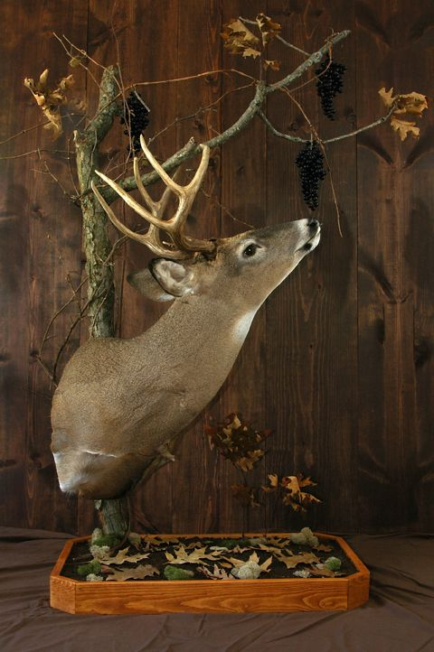 Deer Browse – Extension Buffalo County