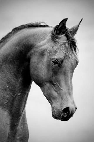It's impossible for a horse to vomit and live