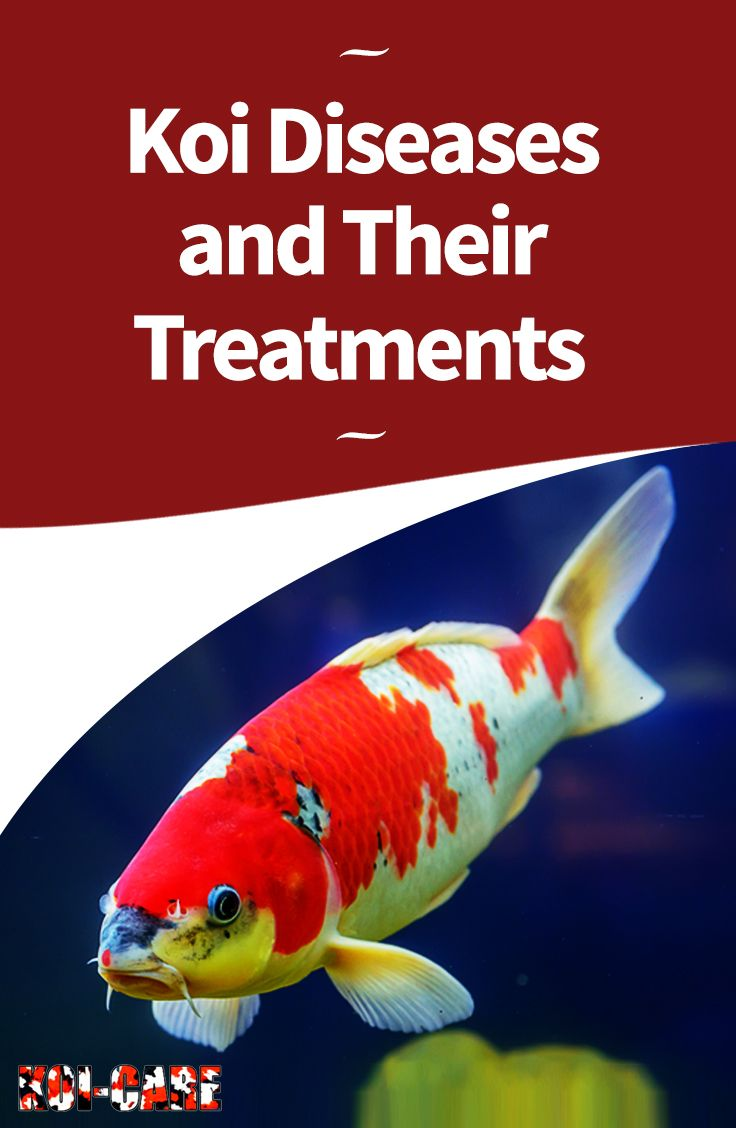 Koi Diseases and Their Treatments: Learn How to Diagnose and