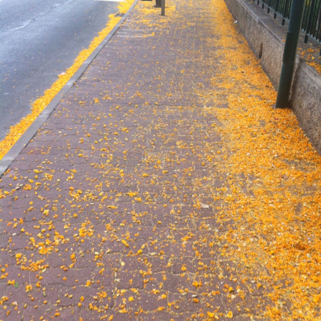 Descreve o teu pin...flores no chão