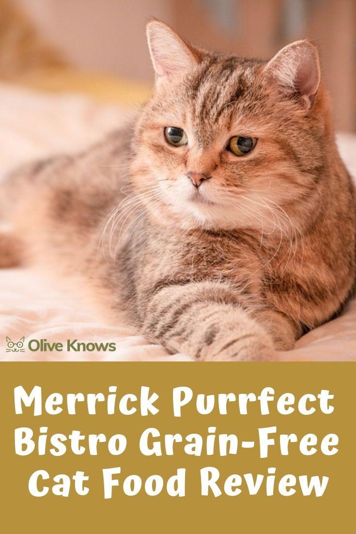 Merrick Purrfect Bistro Grain Free Cat Food Review 2020 Edition Oliveknows Cat Food Reviews Free Cat Food Grain Free Cat Food