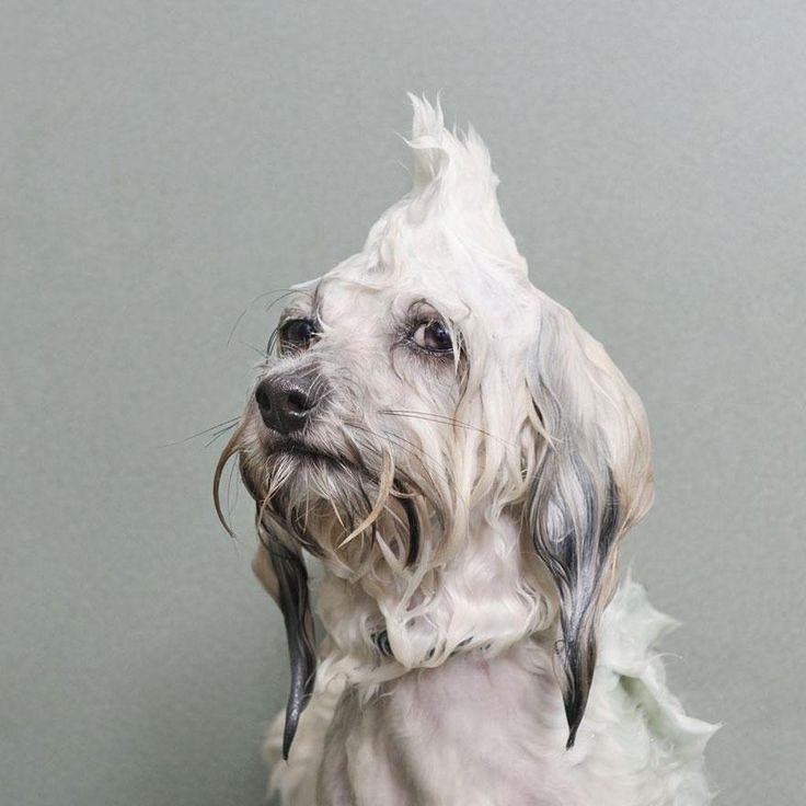 Wet Dog 4 / Sophie Gamand