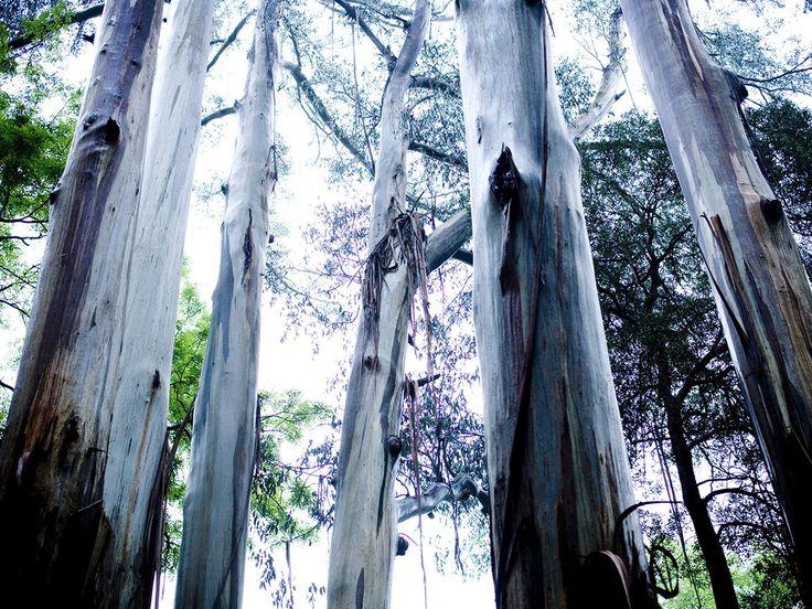 alfred-nicholas-gardens_yvdr_u_1238638_1150x863.jpg (1150×863)
