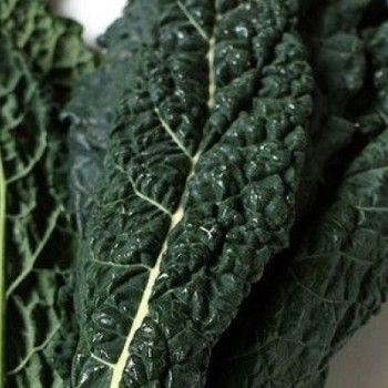 6 More Perennial vegetables (Wild Leeks, Rhubarb, French Sorrel, Mintroot/Chinese Artichoke, Lovage, Sea Kale)