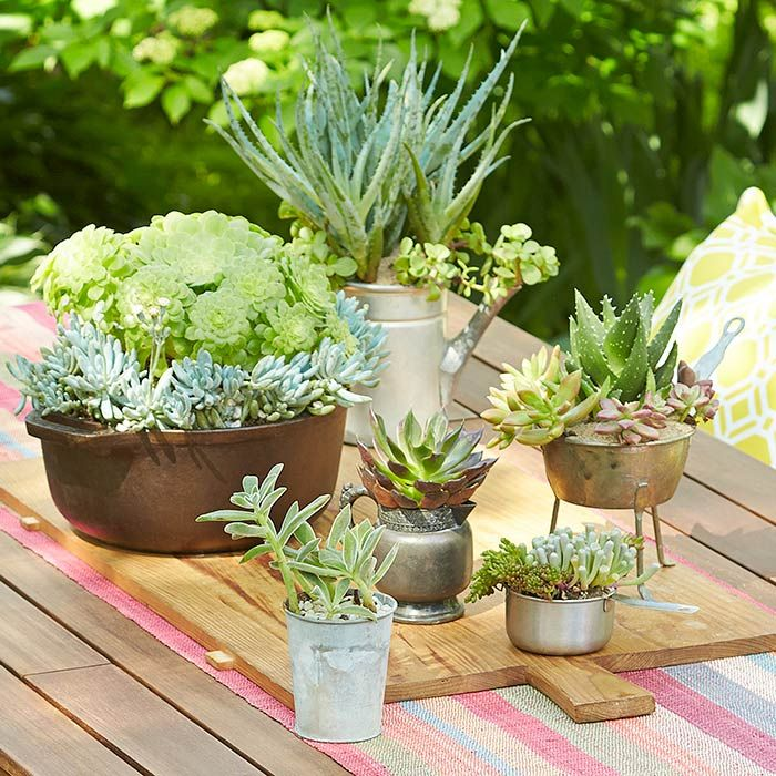 Make Momu0027s Day With Succulents Of Various Shapes And Sizes. Sheu0027ll Love  Them · Lowes CreativeCreative IdeasSucculent PlantersSucculent Rock GardenSucculent  ...