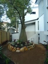 An existing bottle tree bought back to life with a colorful river wall and softened planting scheme