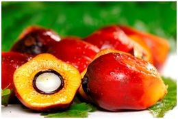 Red Palm Oil health benefits and cooking