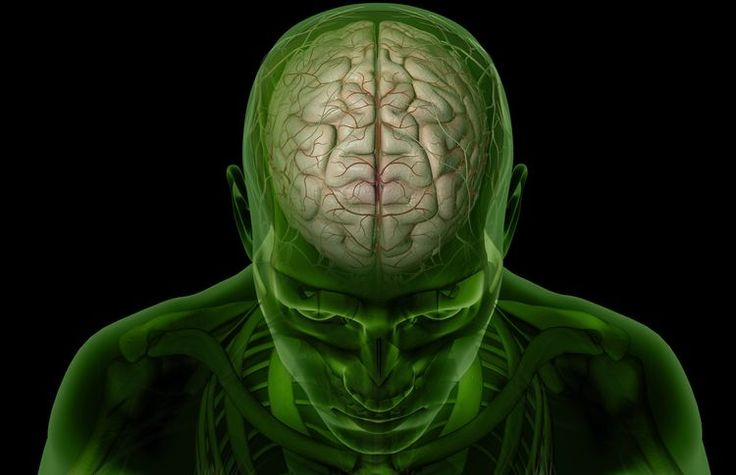 Learn the Basic Structures of Brain Anatomy