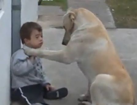 Sweet doggie introduces himself to a child with Downs Syndrome