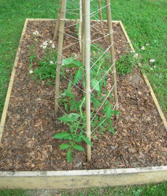 Creative Tomato Supports Made With Scrap Wood Or Bamboo 400 x 300