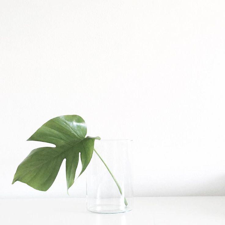 Via aesencecom minimal plant inspo p l a n t for Minimal style