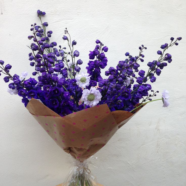 Giant purple Delphiniums with beautiful lilac Scabiosa