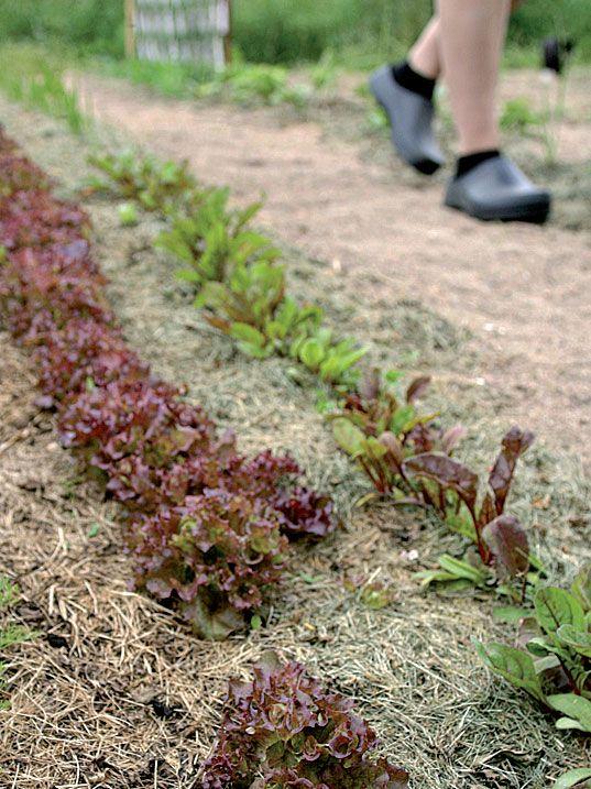 HIEKKAVILJELYSTÄ:  http://www.suomela.fi/piha-puutarha/Hyotykasvit/Hiekkaviljely-Voiko-puutarhanhoito-olla-nain-helppoa--51022?p=0