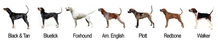 "coonies make the world go round. :) i love this ""line up"". via: coonhoundcompanions.com"