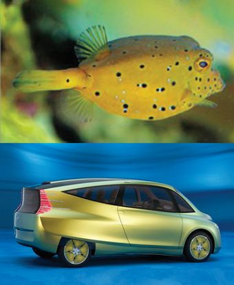 Mercedez- Benz engineers mimic the design of the boxfish when remolding a new car. The characteristic of rigidness yet lightweight were applied to the vehicle. Vehicle proved to reduce drag and was more fuel efficient.