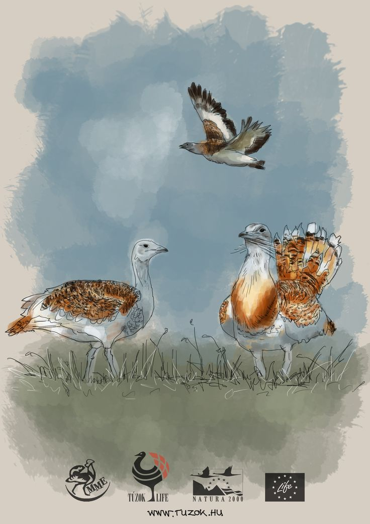 Otis tarda - Great bustard (Túzok). I painted it for a contest of a nature conservation organization. The task was to design canvas bags with the illustration of specified species. Art by Kölyök