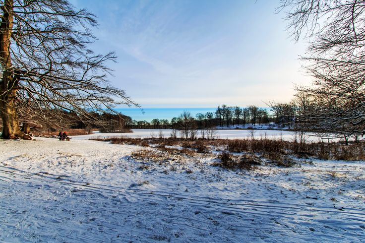 Winter in the Deer Park at Lake Fuglsang