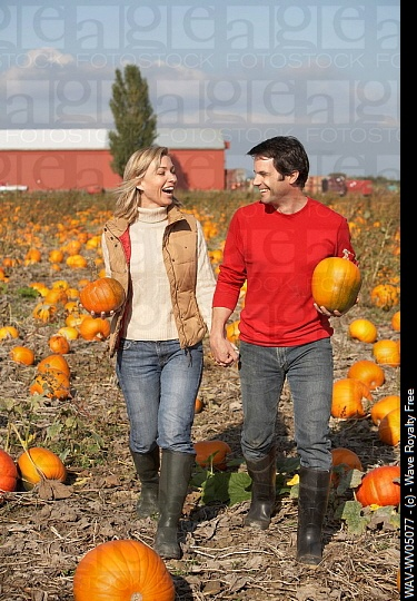 How cute would a pumpkin patch engagement shoot be?