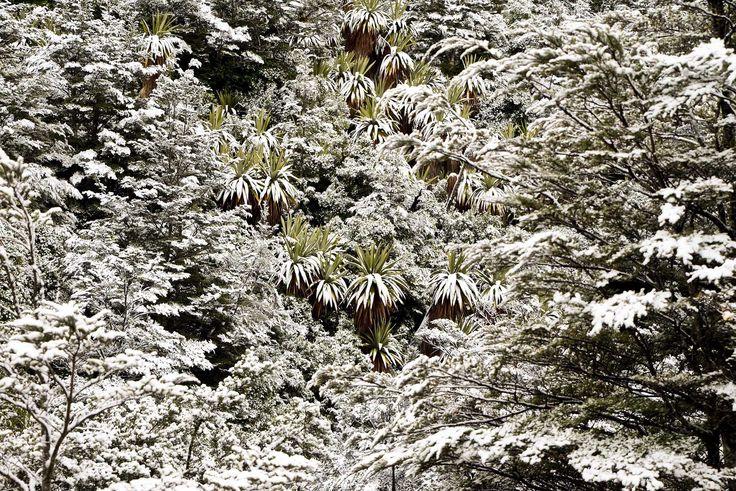 Snow falls around New Zealand