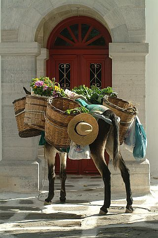 Donkey in Mykonos. Mykonos, Cyclades http://www.rooms-2-let.com/hotels.php?id=146