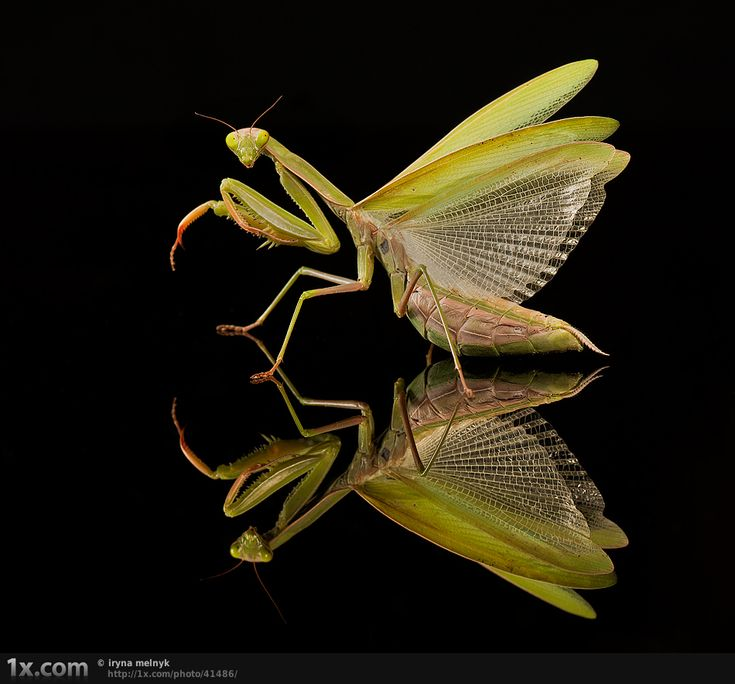 Great site with macro photography