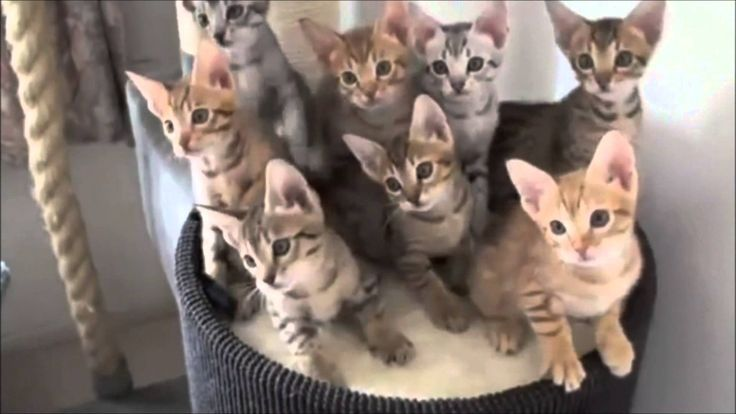 Funny Cats - Śmieszne koty - By MojeParodiePL [Koty Na Potęgę]