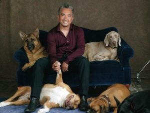 The Dog Whisperer -TV Shows We Said Goodbye to in 2012 - http://www.heartofglassmagazine.com/2013/01/19/tv-shows-we-said-goodbye-to-in-2012/#
