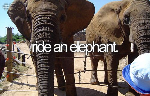 Pet an elephant Before I die!