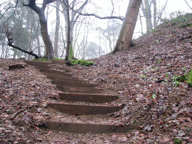 Hillside Stairs Woodland Walk In Whitlingham Country