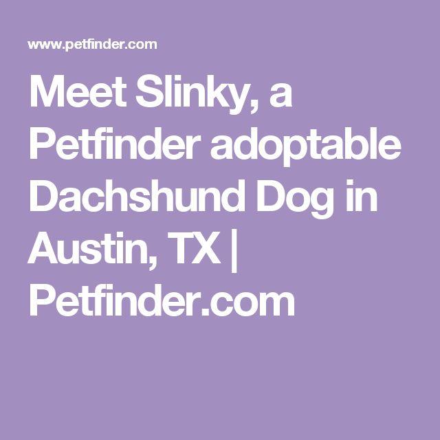 Meet Slinky, a Petfinder adoptable Dachshund Dog in Austin, TX | Petfinder.com