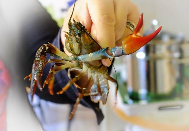 Crayfish, by Heikki Rantala