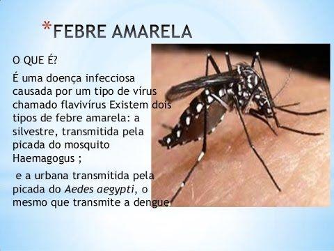 Febre amarela: sintomas, transmissão e prevenção - cuidado ela mata