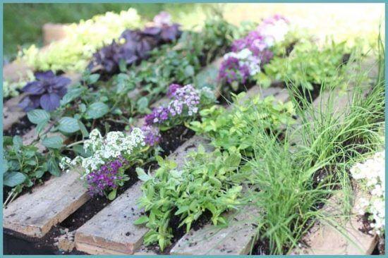 Ароматная грядка: пряные травы на вашем огороде
