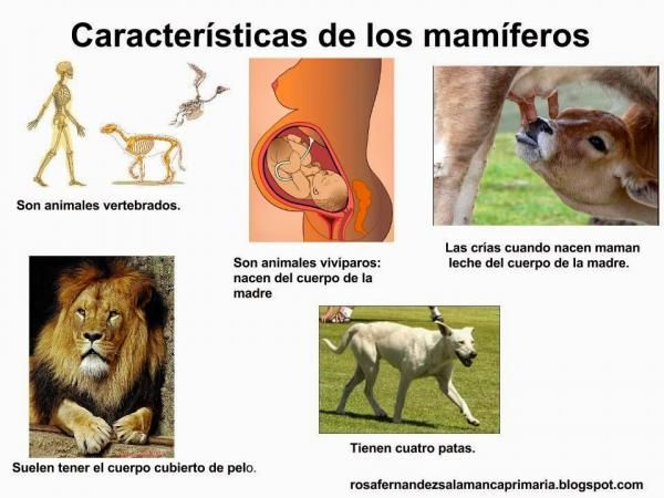 Mamíferos Características Generales Animales Vertebrados Vertebrados E Invertebrados Vertebrados